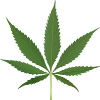 Columbia Workers' Compensation Lawyers weigh in on the use of medical marijuana while on Workers' Compensation.